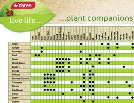 A full list of companion plants in a downloadable pdf version. The Yates Companion Planting Guide.