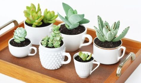 Tu Organizas.: Jardim em xícaras