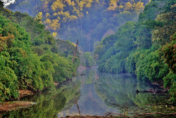 The Traveling Gecko - GAVI, a eco-tourism destination, part of the  Periyar Tiger Reserve (Kerala).