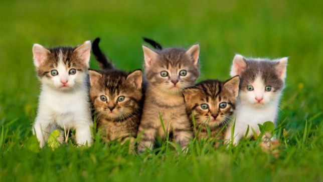 ... and 8 of the friskiest feline names ever recorded at the animal shelter.