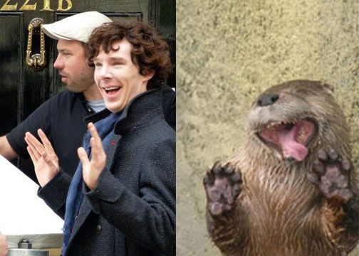 Just when you thought you'd seen enough Sherlock otter pictures.
