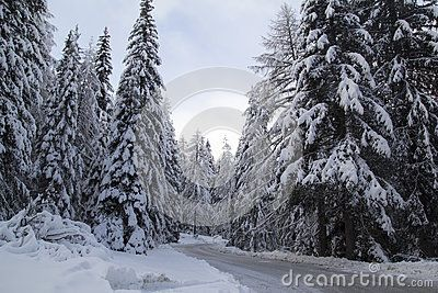Street and trees covered with snow