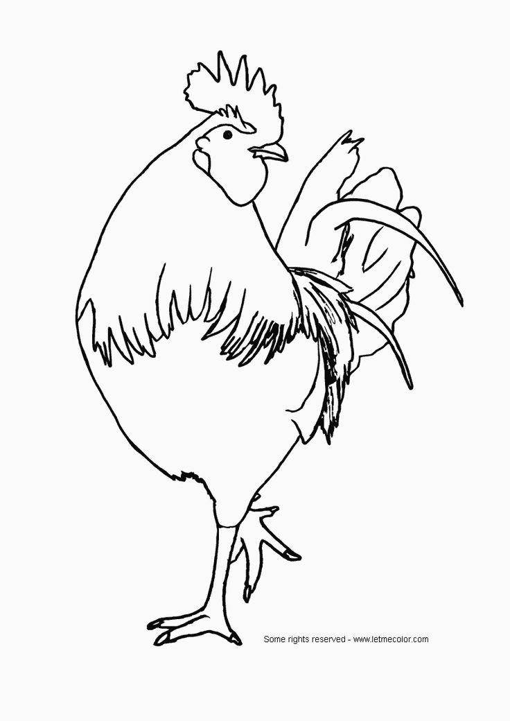 Free Rooster Pictures to Print | Printable Rooster Picture - Index of /