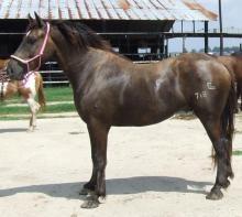 Angola Rodeo