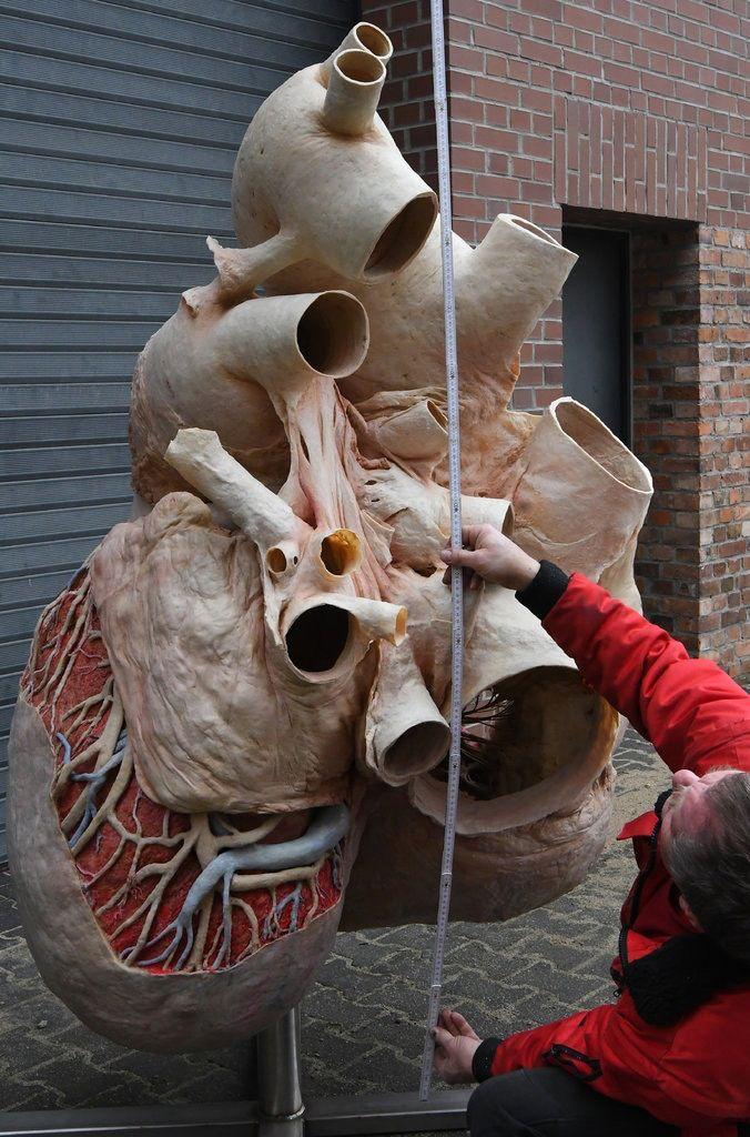 قلب الحوت الأزرق بقلم محمد حسن جبارة Blue Whale Heart Blue Whale Whale