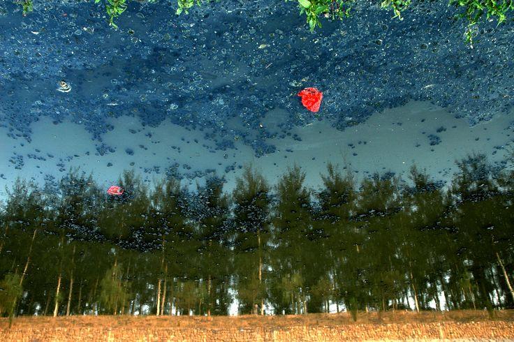 Grove I: Urban Amber 2011  100x150cm, 60x90cm C-Print