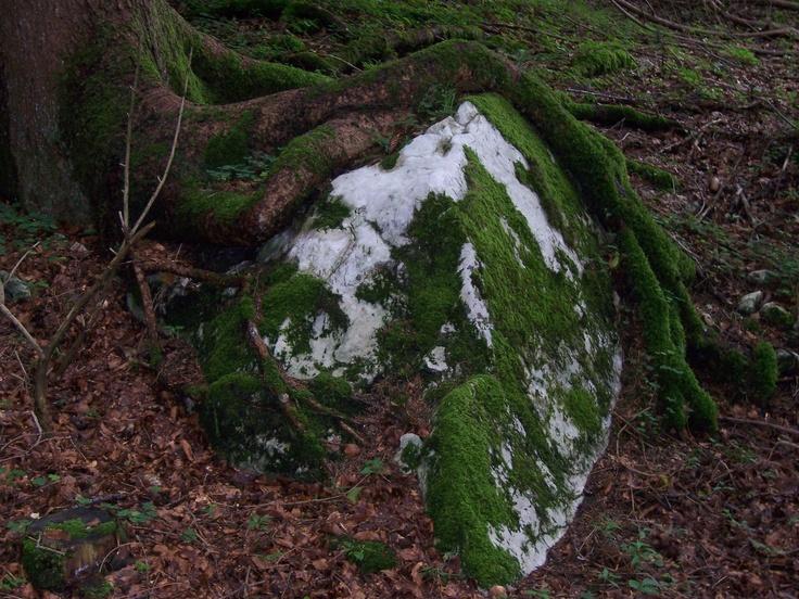 Symbiose von Stein und Natur ©Foto: Sofia Delgado