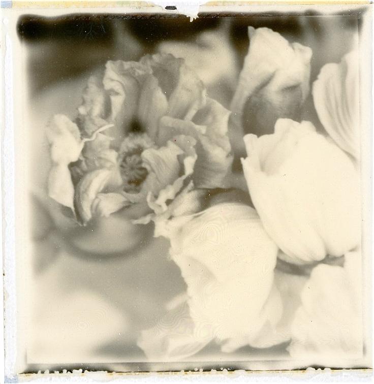 Photo Polaroid by Hania Destelle