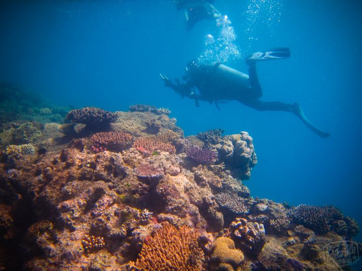Best 25 great barrier reef diving ideas on pinterest - Best place to dive the great barrier reef ...