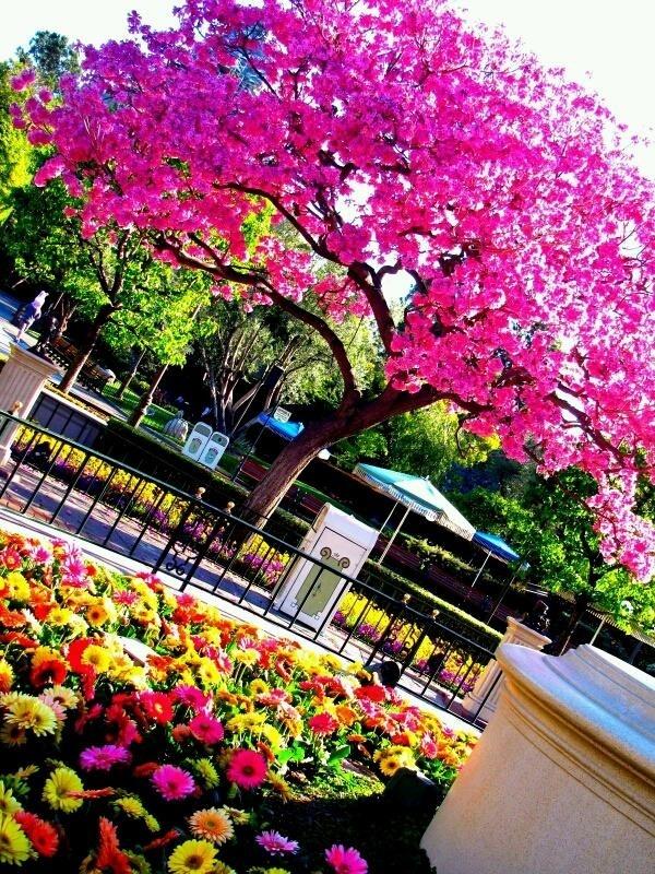 The Colors of Disneyland