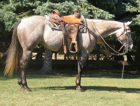 Are you looking for a roping horse, trained on both the head and heel side? Check out this 2007 gelding on Equine.com