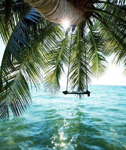 A palm tree frond brushing the calm ocean water, with a swing tied to it, this is where I want to be