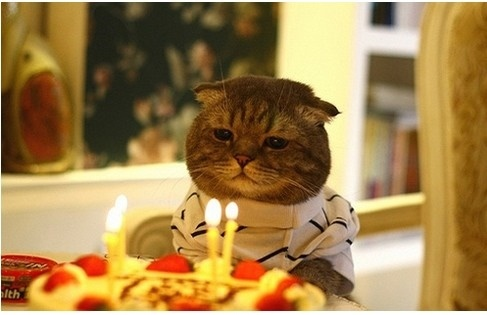 cat. 생일 축하 하는 고양이.