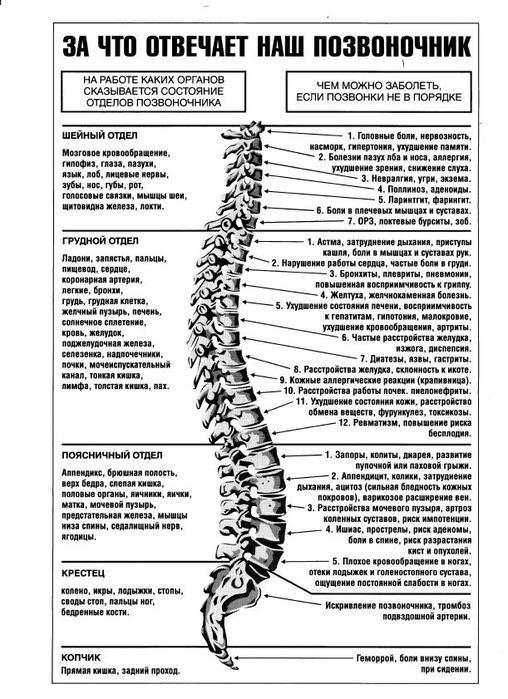Жалобы при болях отдельных позвоночников и что это означает | thePO.ST