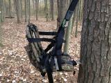 Tree Web 5