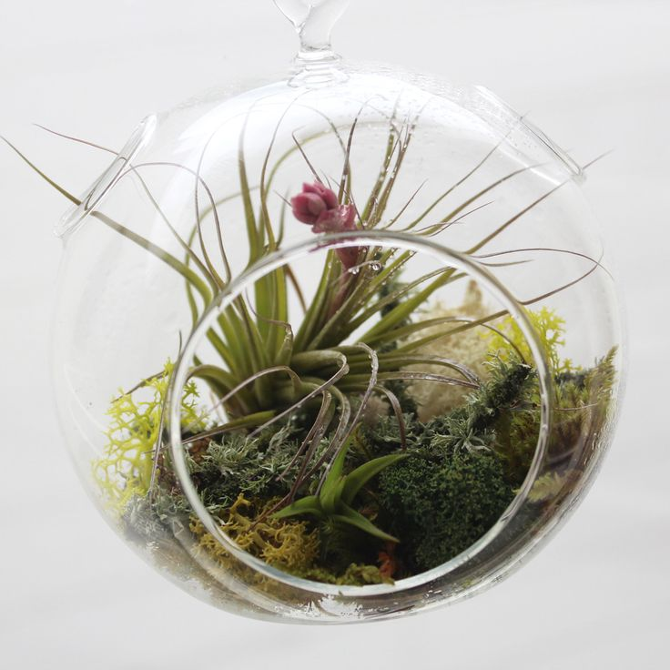 94 best ideas about Air Plants on Pinterest Gardens Planters