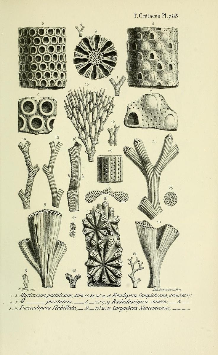 Fossils. Paléontologie française ser. 1, Cretaces, t. 5, Atlas  Paris :Chez l'auteur,1840-1894.  Biodiversitylibrary. Biodivlibrary. BHL. Biodiversity Heritage Library