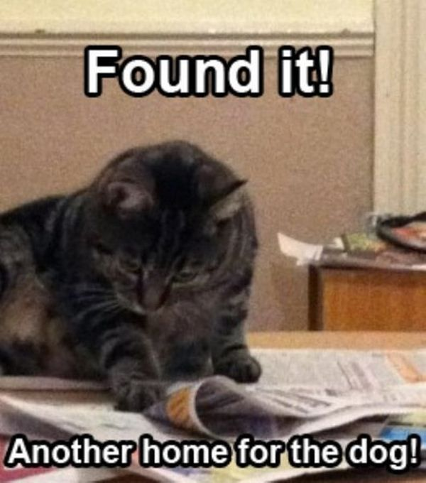 124 best images about Funny Cat Memes on Pinterest | Cats ...