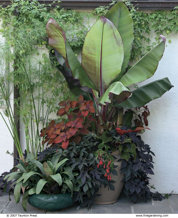 combo for the banana plants