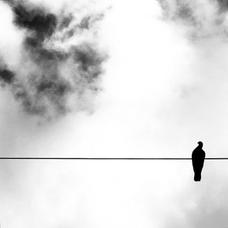 Black white photography inspiration bird on the wire lehonard cohen