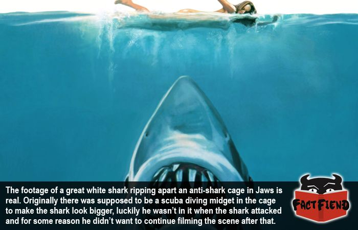 Jaws Film The Shark Underwater Google Search That S Some Bad Hat Harry Shark Shower