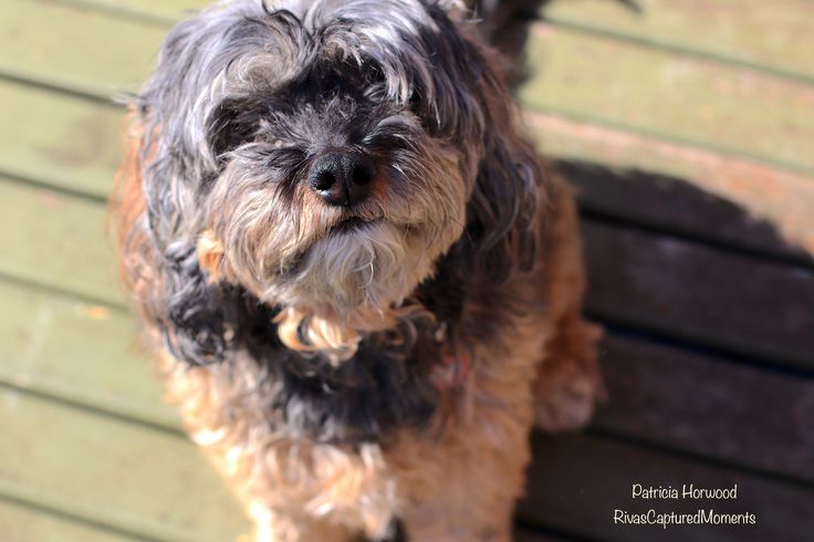 Adorable Frankie! she is just plush gorgeous Pet Photography by Patricia Horwood