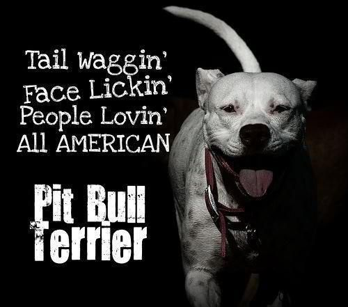 Pit bulls life