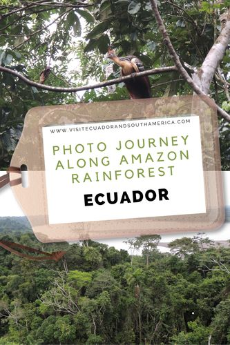 Get inspiration to plan your trip to the Amazon rainforest in Ecuador!