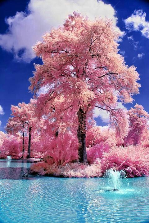 NiceBlue Sky, Water Gardens, Nature, Pink Trees, Candies Trees, Beautiful, Cotton Candies, Places, Japan Gardens