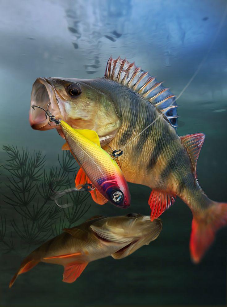 Картинки о рыбалке и рыбе