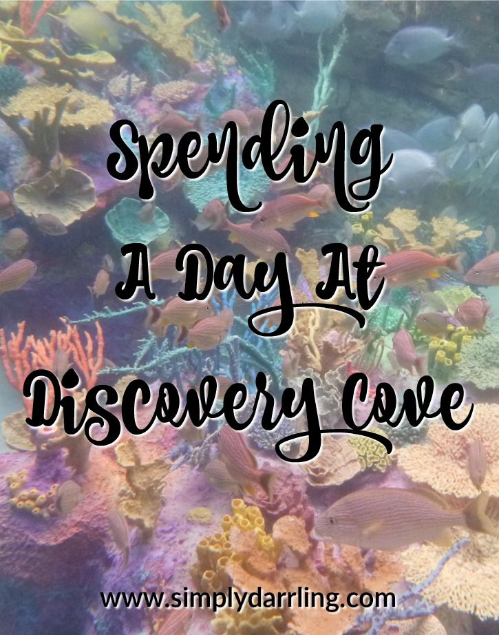 Thinking of visiting Discovery Cove in Orlando, Florida? Check out why I think this is a must do activity (and what was my favorite).