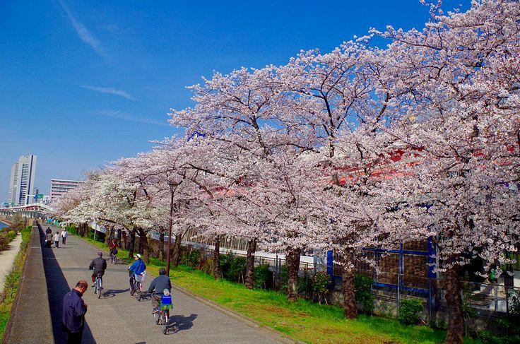 隅田公園1.jpg  http://www.jnize.com/en/article/100000034/
