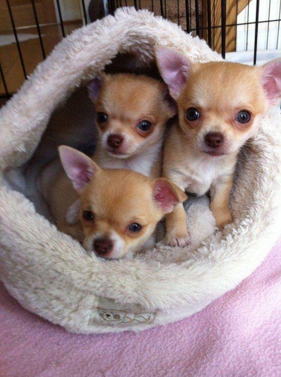 3 x cute