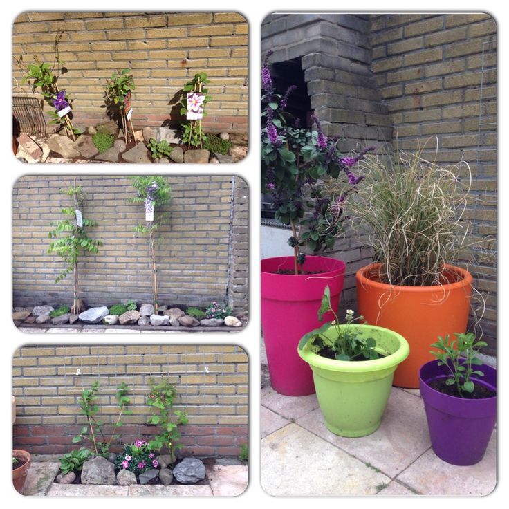 De nieuwe planten  17-05-2015