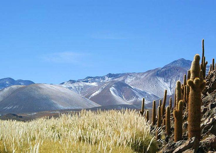 1.-Scenery-of-the-Atacama-cacti-and-pampass-grass