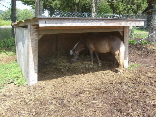 Best Horse Shelter : Best goat housing images on pinterest goats