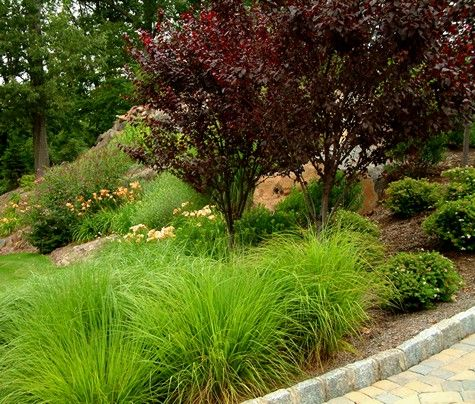 273 best ornamental grasses images on pinterest for Ornamental grass landscape ideas