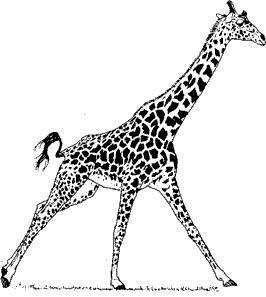 facts about giraffes -- Kids' Planet -- Defenders of Wildlife http://www.kidsplanet.org/factsheets/giraffe.html#