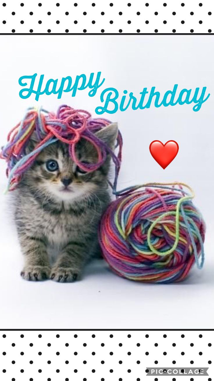 49 Best Cats Birthday Wishes Images On Pinterest Happy Birthday