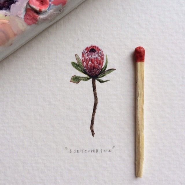 Lorraine Loots: Tiny Watercolor Pink Ice Protea