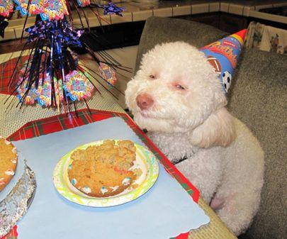 Banana Birthday Cake For Dogs ~ Best dog birthdays images happy b day happy