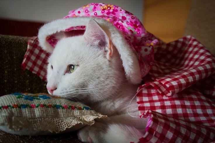 Picur / in costume :)