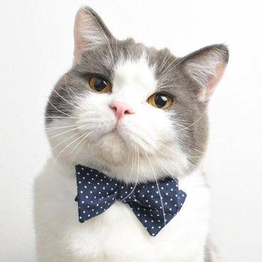 Collier noeud papillon pour chat - Bleu marine à pois blancs