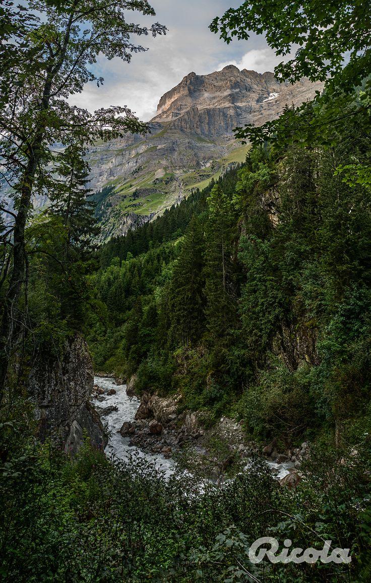 #Switzerland #Forrest #Alps #Ricola