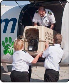 Pet Transport yang untuk hewan peliharaan merupakan sebuah hal yang harus dilakukan pemilik hewan