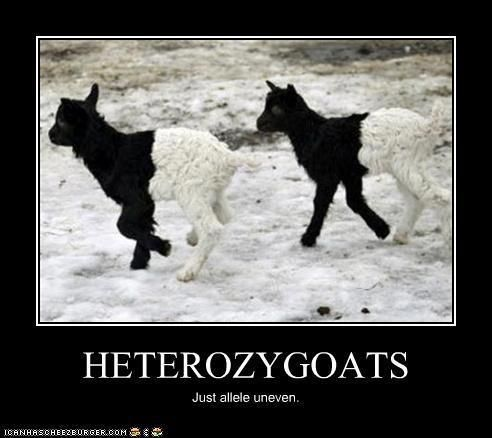 Ha!  Science nerd jokes...they just never get old.