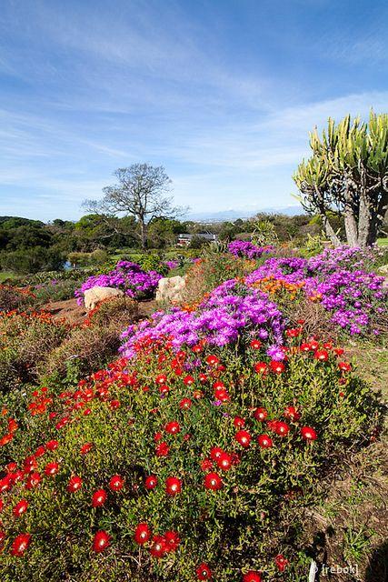 Kirstenbosch Botanical Gardens Cape Town by christoph.rebok, via Flickr