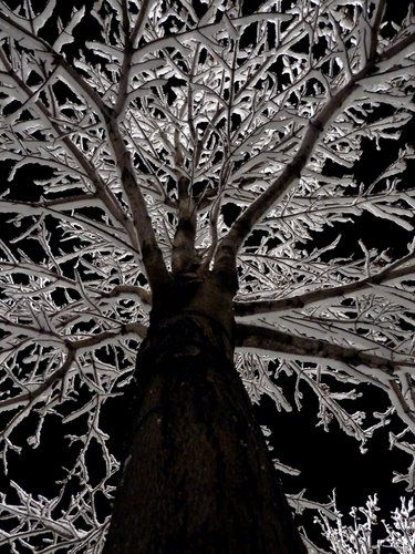 A night shot of an iced tree... by Spencer Baugh on panoramio.com