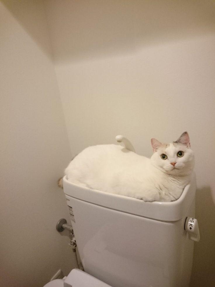 「そこにいられると、流せないんだが…」すっぽり入りすぎて違和感のない猫が話題に