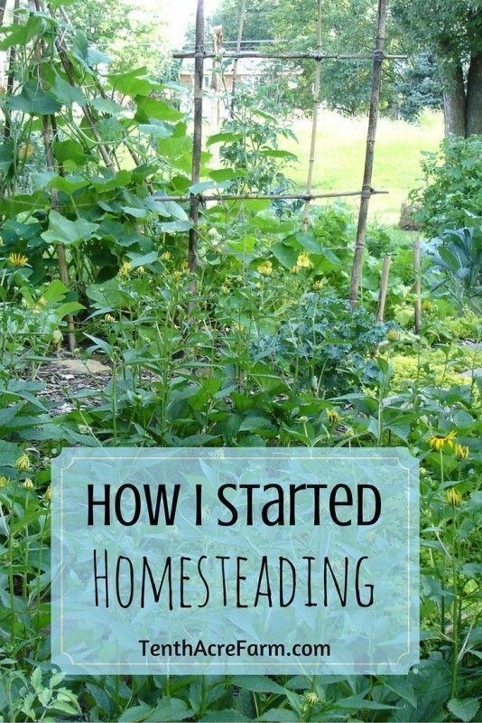 How i started homesteading homesteads farming and gardens for Modern homesteading